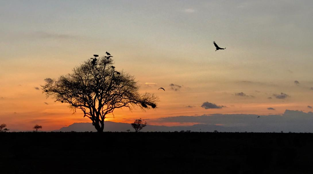 A sunset seen by a family volunteering in Kenya
